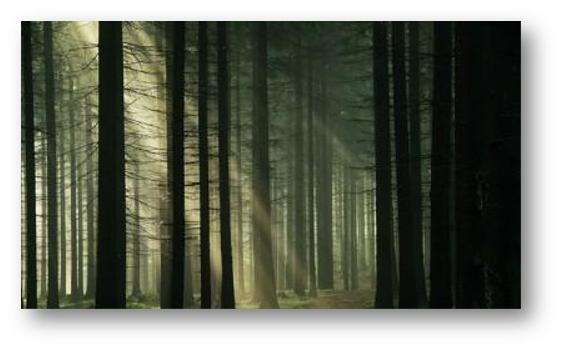 Padurea Baciu si turismul paranormal