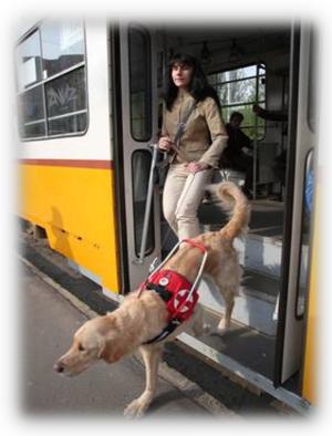 Câinii special dresaţi, pot uşura viaţa nevăzătorilor. Câţi îşi pot permite asta?