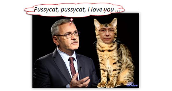 Dragnea, pussycat ...